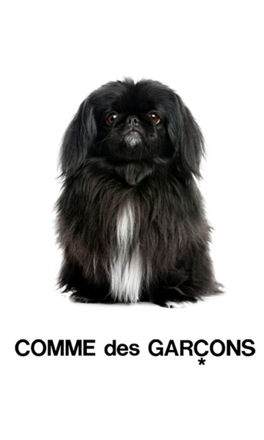 Fashion-Dogs-Pop-DuJour-Garage-Magazine-Ahmad-Swaid